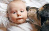 6 Tips to Help Children How to Respect Animals and Nature